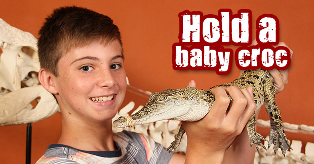 homepage-hold-a-croc
